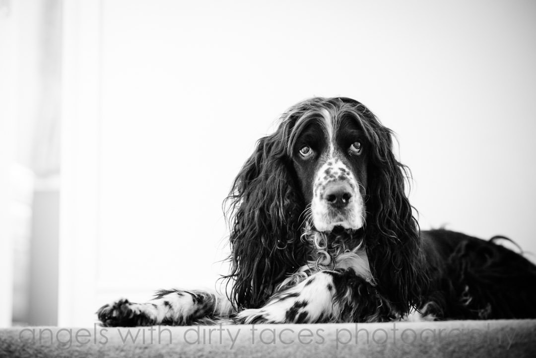 families beloved dog who wasn't invited to this tewin bury farm hotel wedding - tim and kate