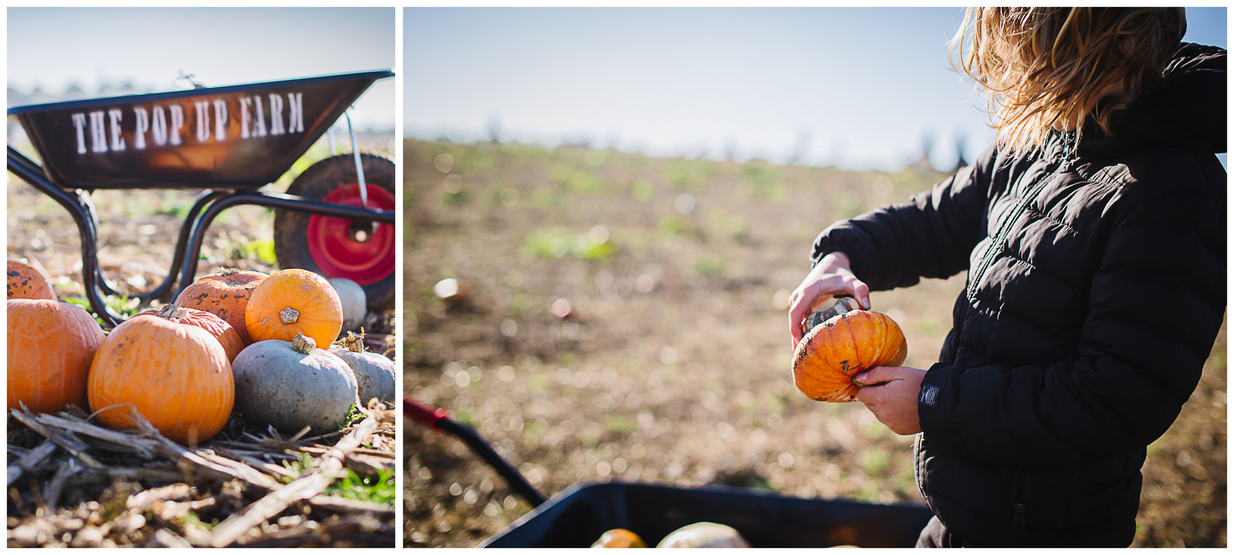 hertfordshire family photographer captures young boy in a pumpkin field