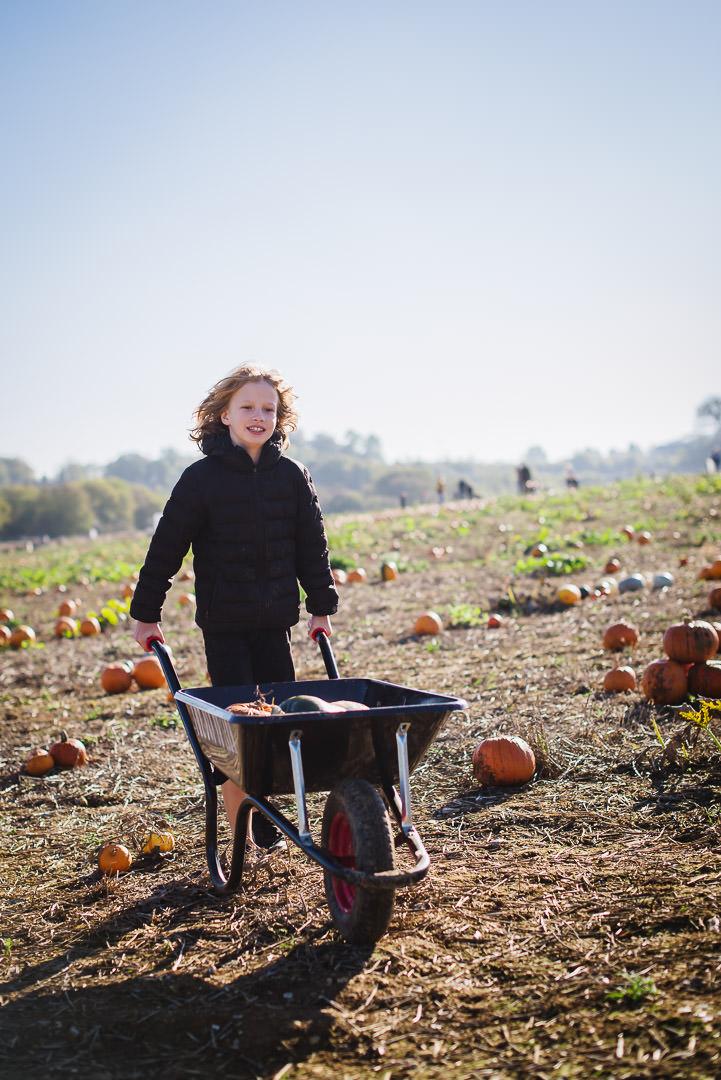 wheelbarrow fun at the pop up pumpkin farm