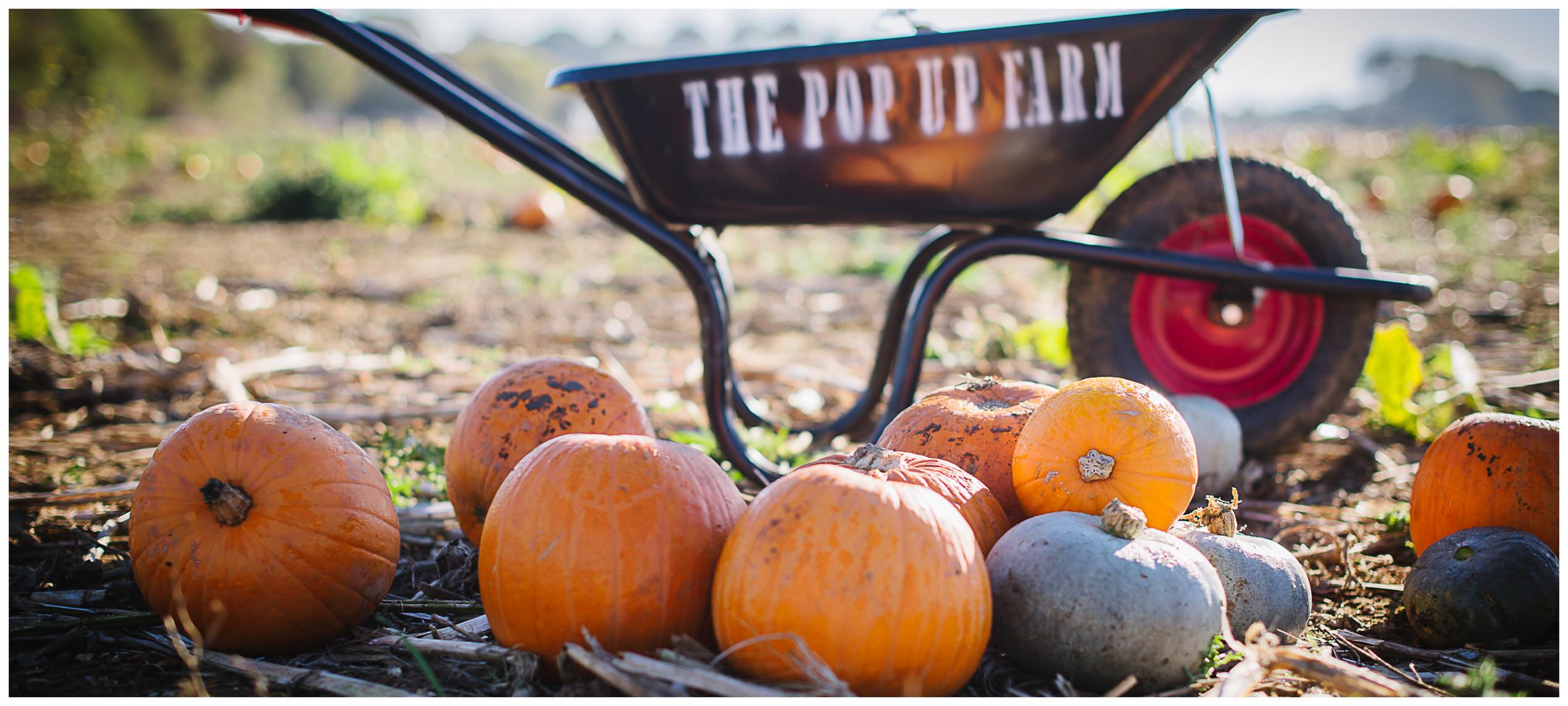 a selection of pumpkin varieties at the pop up pumpkin farm